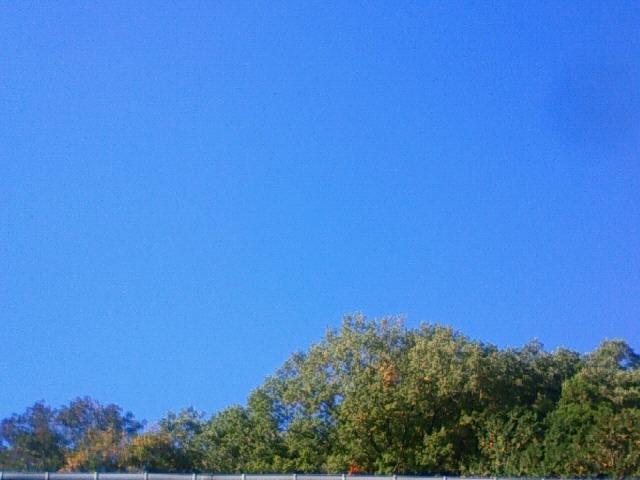 秋晴れですね。